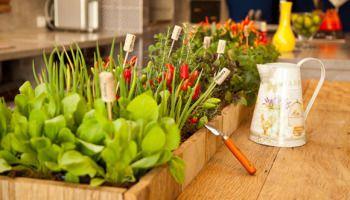 Os benefícios de cultivar o próprio alimento
