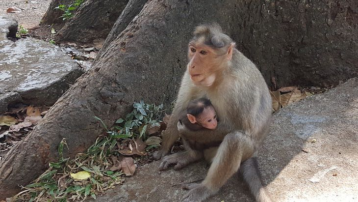 Reserva De Tigres Em Periyar, Kerala | Viaje Comigo