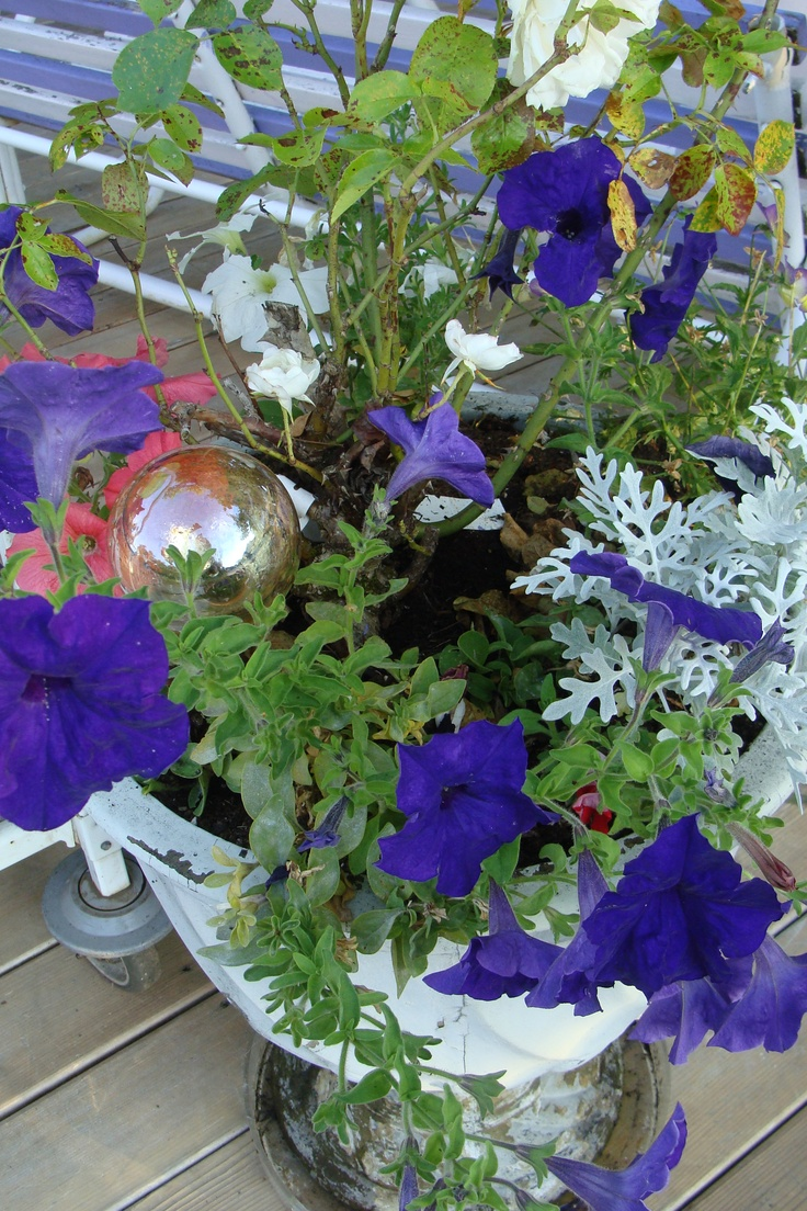 More beautiful petunias with the variety of colors the combinations are endless