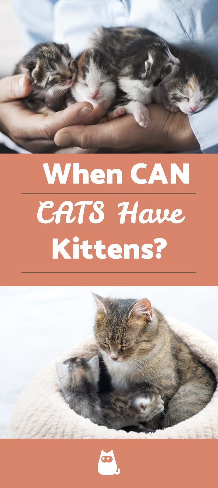At What Age Can Cats Have Kittens Con Imagenes