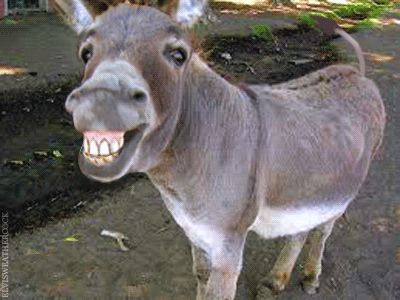 I Think That Donkey Has Been Eating The Neighbor S Weeds