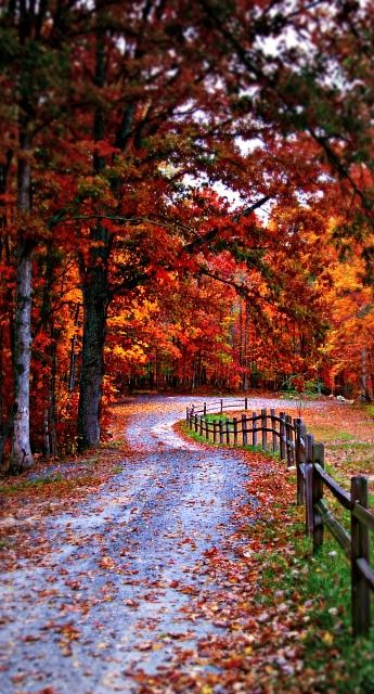 Country Roads of El Dorado County: Beautiful California fall colors! #ElDoradoCounty #fall