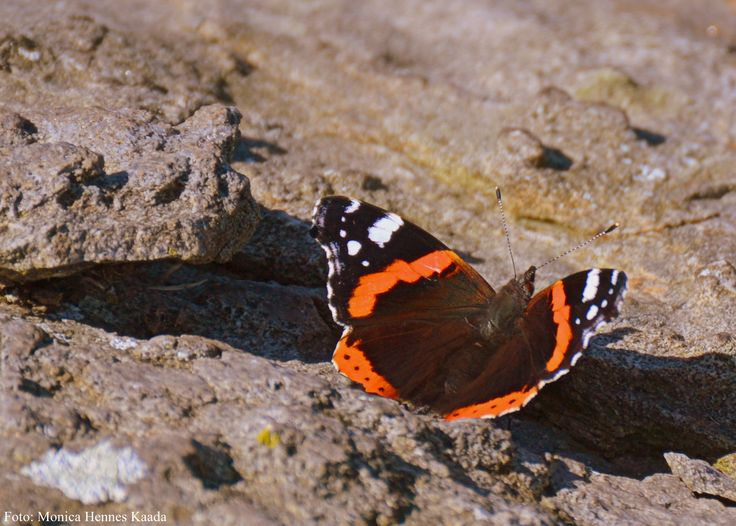 #butterfly