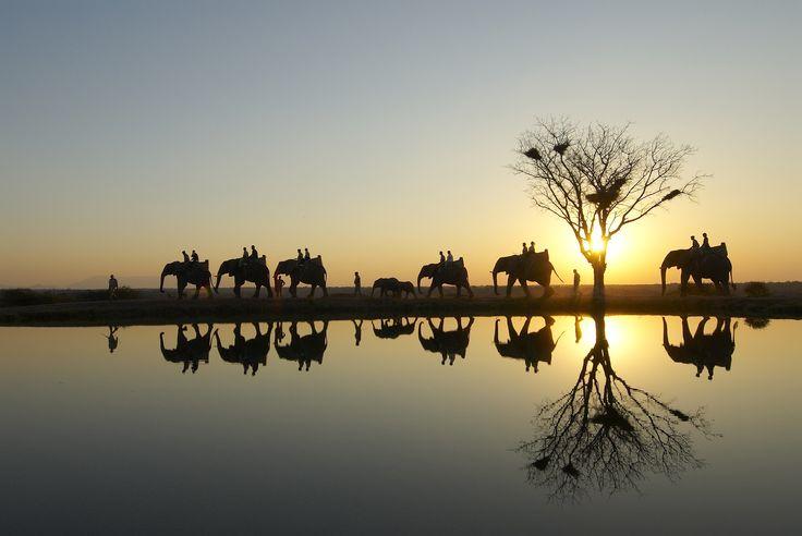 Camp Jabulani - Afrique du Sud