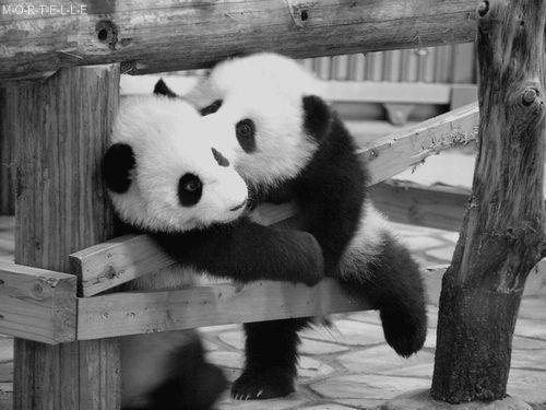 Panda hugs. Meeeeh :)