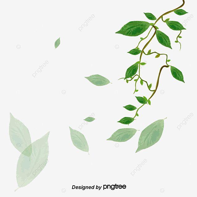 أوراق الشجر ناقلات شجرة أوراق الشجر اوراق اشجار Png وملف Psd للتحميل مجانا Plant Leaves Plants Tree Leaves