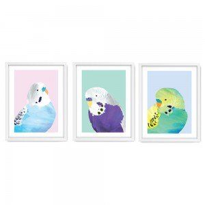 Set of 3 Pretty Budgies Wall Art Prints