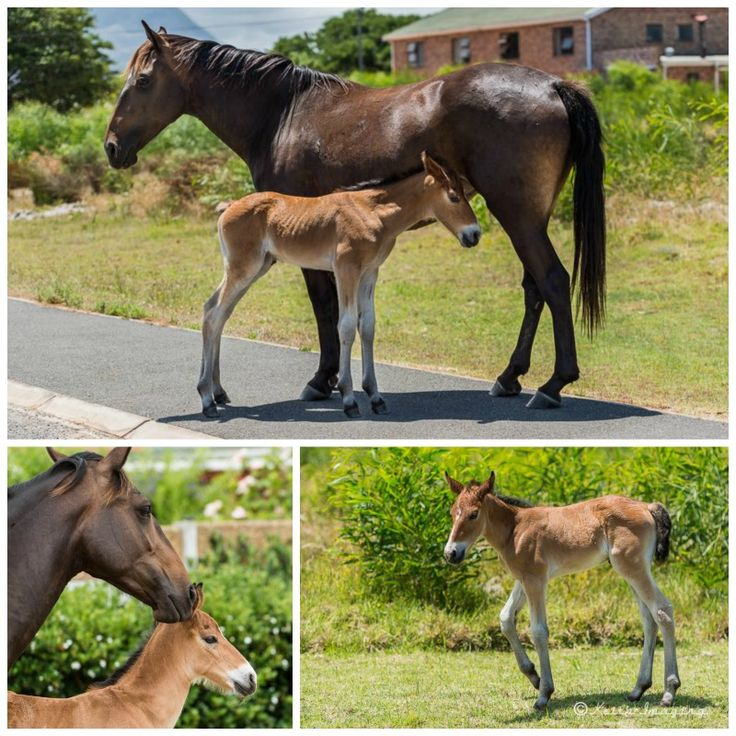 The wild horses for Fisherhaven welcome a newborn to the fold