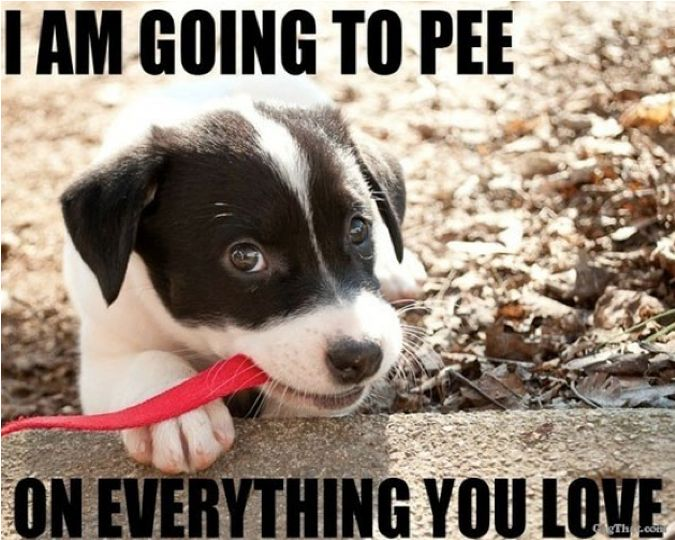 14 Best Images About Pet Urine And Odor Removal On