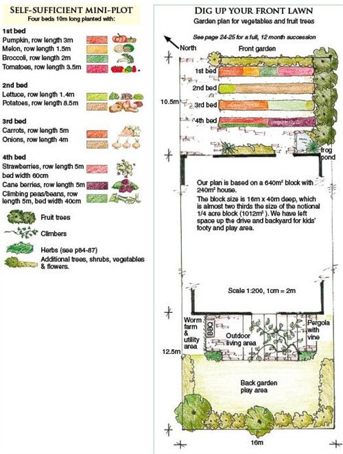 Dig up front lawn for veggie/fruit patch.