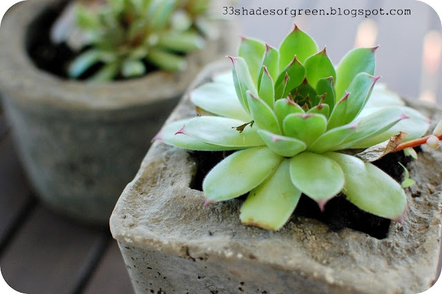 33 Shades of Green: Making Hypertufa Pots: Plants Can, Gardens Ideas, Cement Planters, Cement Pots, Flower Pots, Hypertufa Pots, 33 Shades, Diy, Shades Of Green