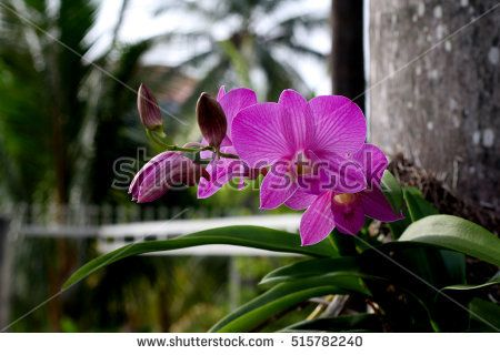 orchids flowers images, wallpapers, backgrounds, patterns / Asia flowers