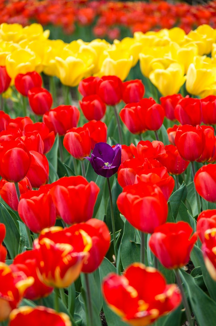 The 29 best Colorful flowers images on Pinterest   Colorful flowers ...