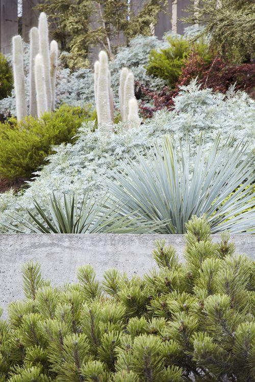 Foliage : Colour : Mixed Planting