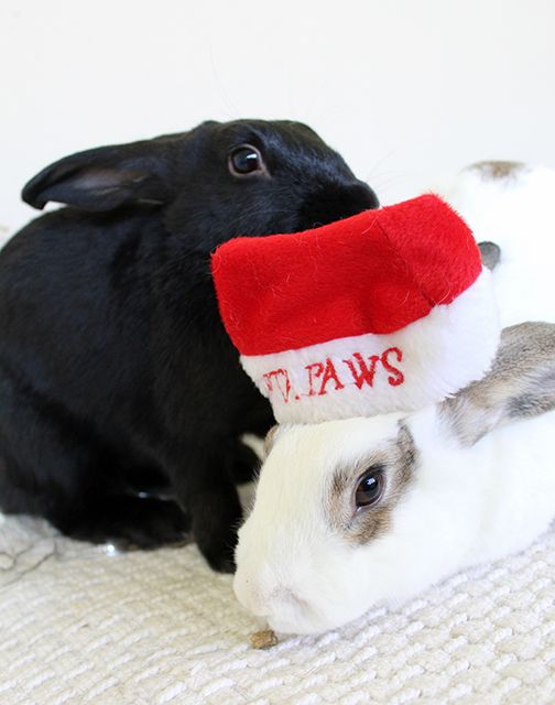 On the blog: Santa Paws is coming to town. A list of gorgeous gifts for your pets!!