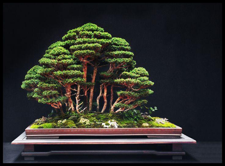 1000 id es sur le th me jardin zen miniature sur pinterest for Jardin chinois miniature
