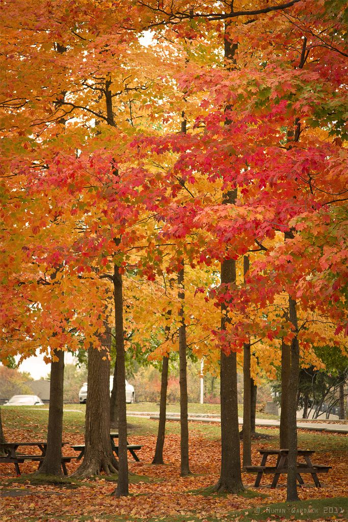 Let us pause for a sit down to breathe in the cool Autumn air while the trees shed their leaves as they prepare for a winter's rest.