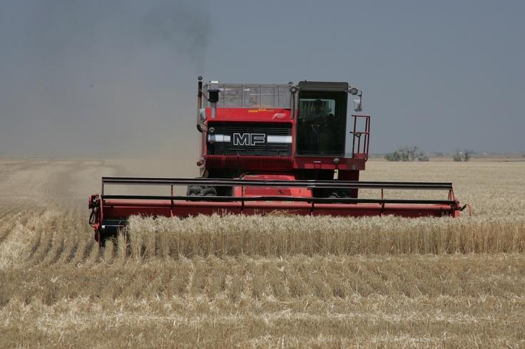 Hays, KS Wheat Harvesting
