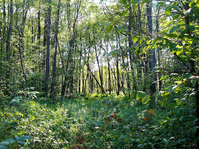 Timberdoodle Flats, Allegheny National Forest
