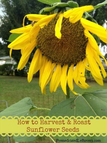 how to eat sunflower seeds reddit