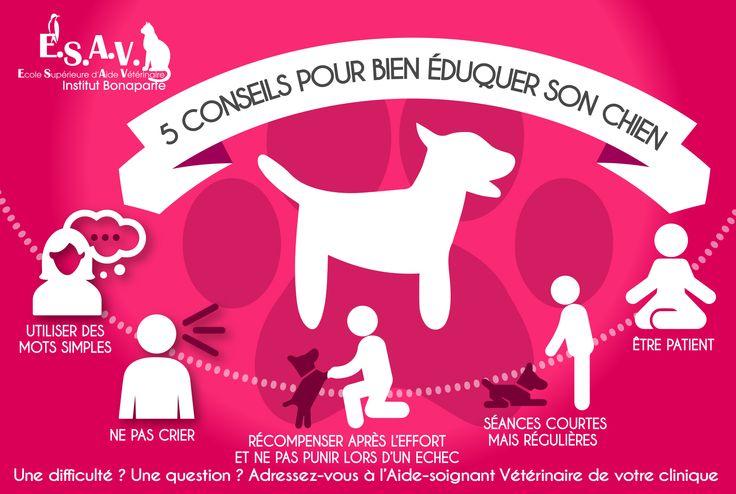 5 conseils pour éduquer son #chien  L' #éducation #canine permet d'avoir un chien équilibré et sociable Voici quelques conseils rédigés par les élèves aides-soignants vétérinaires