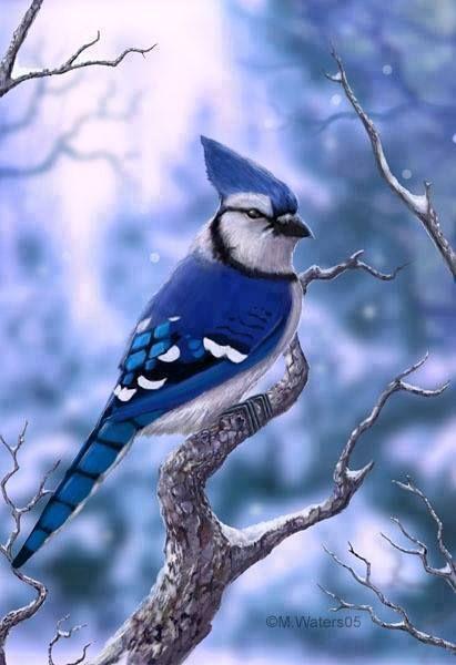 Bye bye blue bird... Contigo se va el invierno.