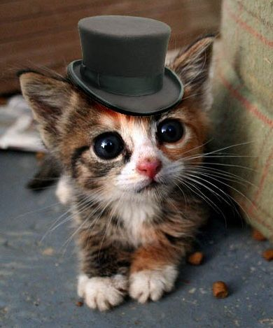 Cat in a Hat. @Caitlin Burton Bradley convince frank I need this cattt.