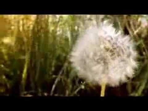 Groove Armada - Inside my mind