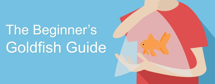 The Beginner's Fun & Easy Guide to Goldfish Care