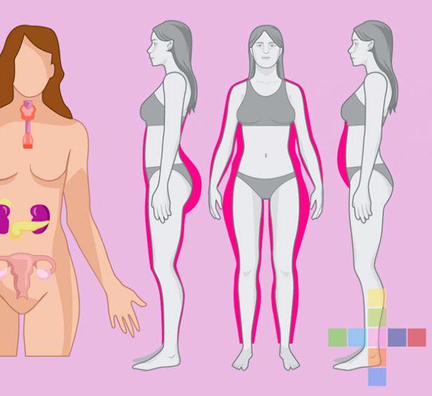 Экология здоровья: Когда наша гормональная система сбалансирована, то гормоны ведут себя как мудрые наставники для организма...