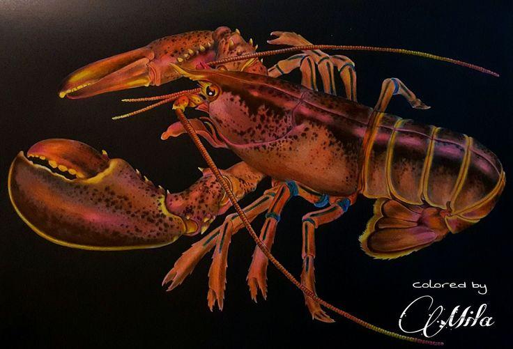Maine Lobster By Mila Gutierrez
