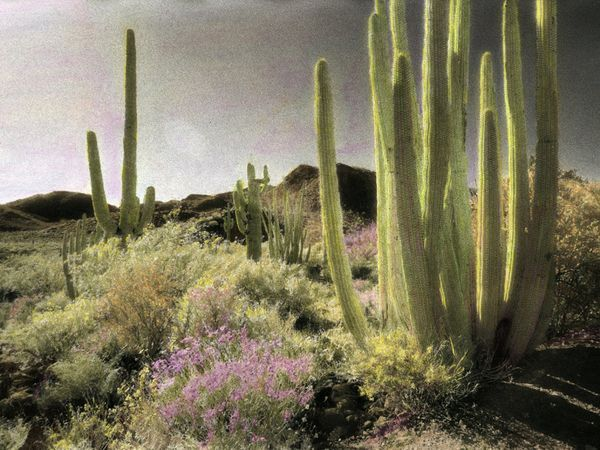 Habitats -- Desert Plant Pictures, Wallpapers, Downloads -- National Geographic