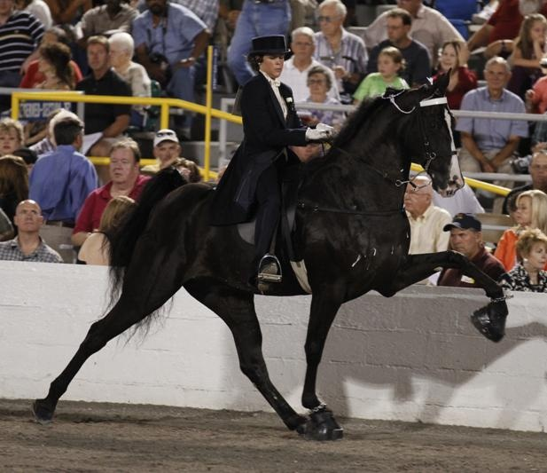 A horse and rider shows in the Owner-Amateur Riders on Walking Mares or Geldings World Grand Championship at the Tennessee Walking Horse National Celebration in Shelbyville, Tenn., on Saturday night.