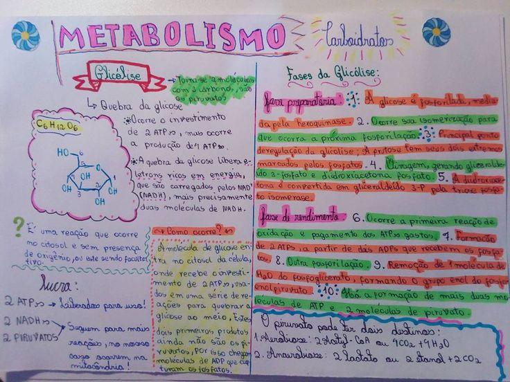 Resuminho de Bioquímica!! (Glicolise) Feito com MUITO amor!! #glicolise #metabolismo #biologia #quimica #bioquimica #resumo #carboidratos #estudo #enem