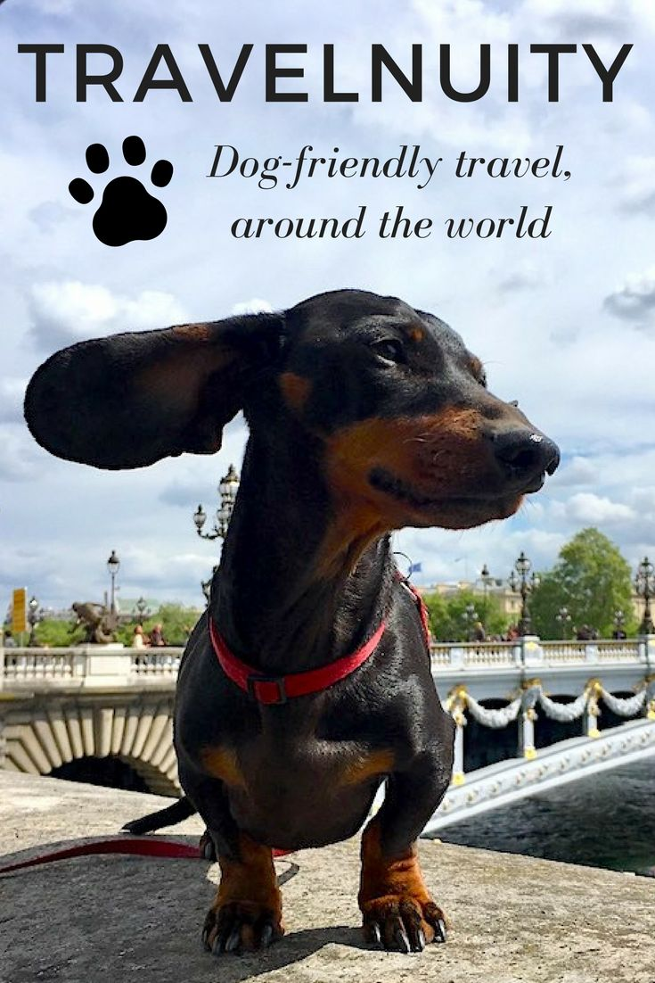 Want to travel with your dog? Find out more about dog-friendly travel at Travelnuity