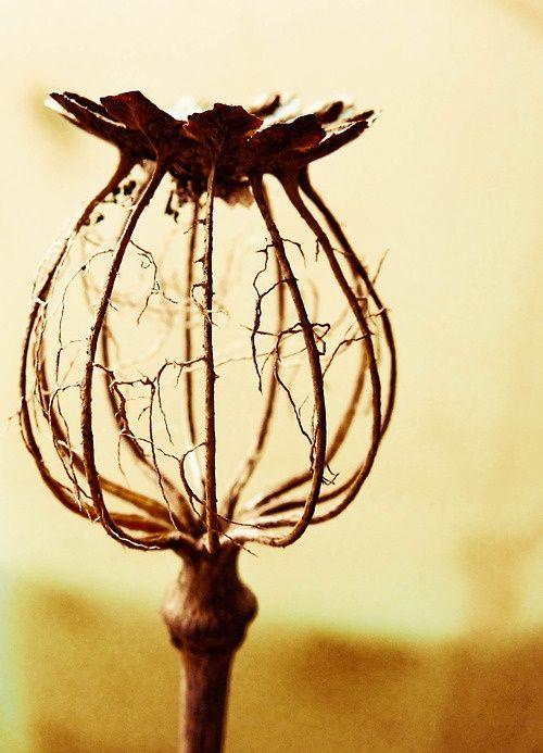 Elle a été graine, puis fleur, puis fruit, puis cette forme éthérée mais elle reste toujours aussi magnifique...