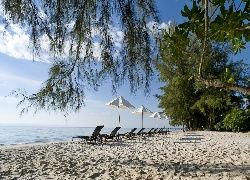 Morze, Plaża, Leżaki, Roślinność