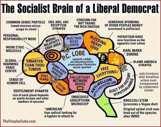 Republican Party Liberal Brain