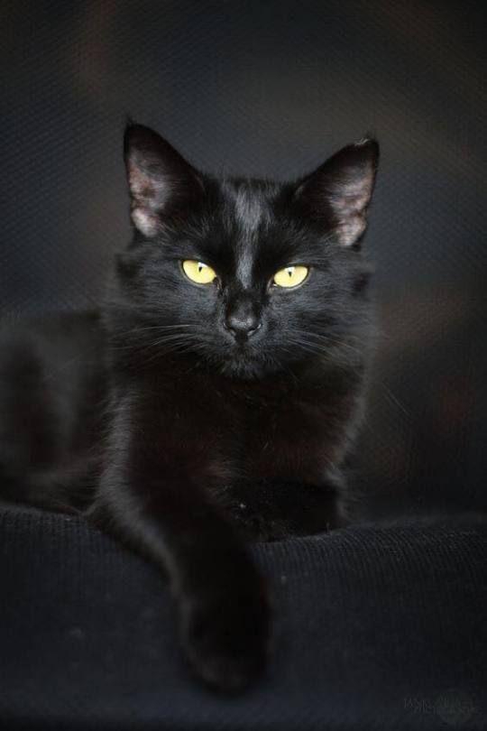 Cazzo nero micio