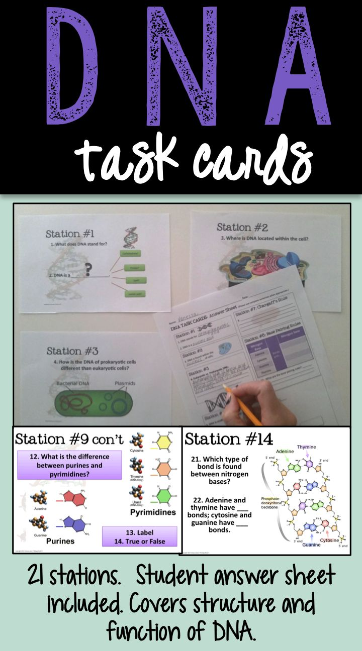 DNA Task Cards. These really helped my kids learn about DNA, particularly its structure.