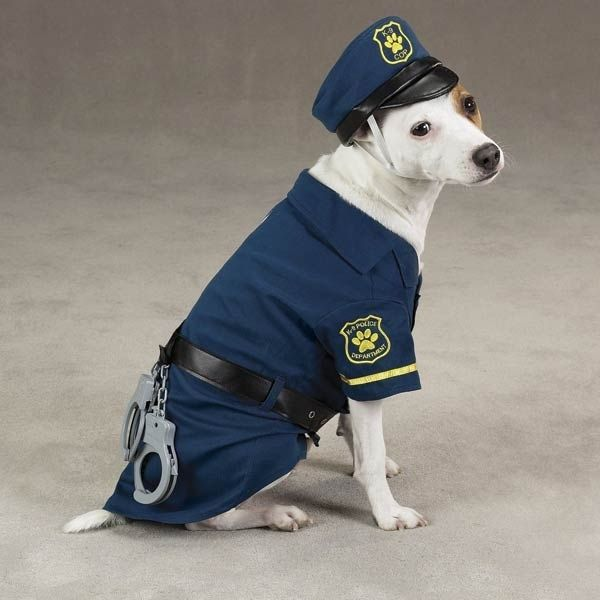 The Top 11 Jobs for Dogs.
