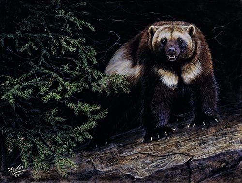 Wolverine By Des Mccaffrey Art Pinterest Wolverines