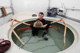 Resultado de imagen para araña gigante del amazonas