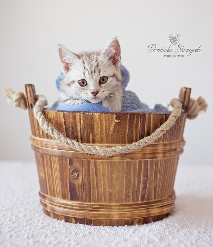Newborn cat photo shoot. Newborn photography. Cat, kitten, katze :)