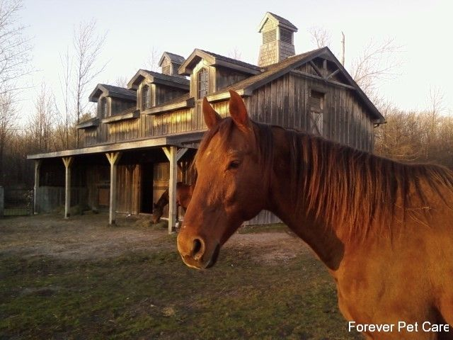 Teddy at the barn http://www.foreverpetcare.com