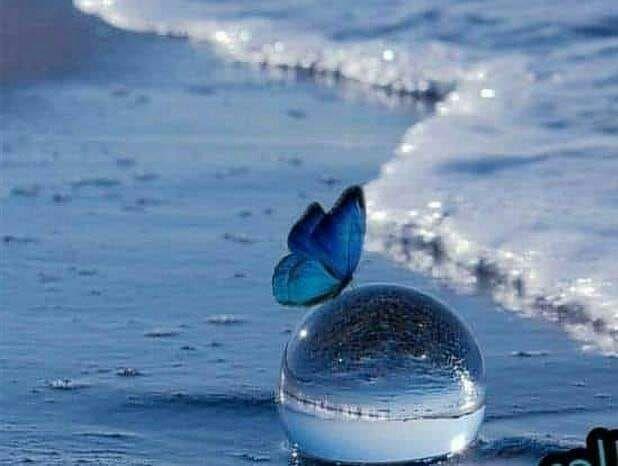 ليس كل اللؤلؤ في البحر مستقره ولا كل معدن نفيس في الأرض مستودعه فهناك أقوال أجمل من كل الدرر وبعض الكلام إن وزنته تجده أغلى من الذهب Decor Home Decor Ecosphere