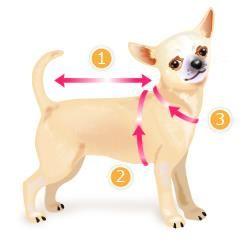 Как измерить костюм для собаки