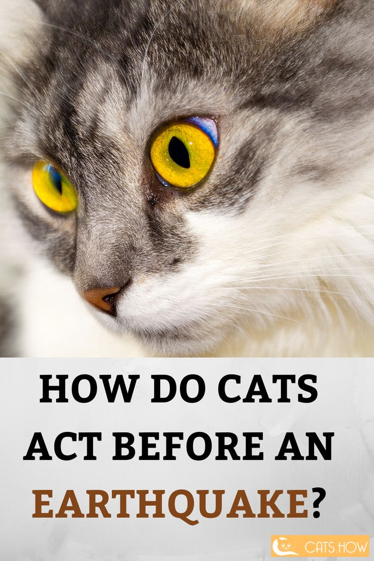 How Do Cats Act Before An Earthquake Pets Cat Food Pamper Pets