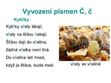 Vyvození písmen Č, č Kytičky včely lákají, včely na šťávu čekají. Šťávu dají do včelína, žádná včelka není líná. Do včelína letí hned, když je šťáva, bude.