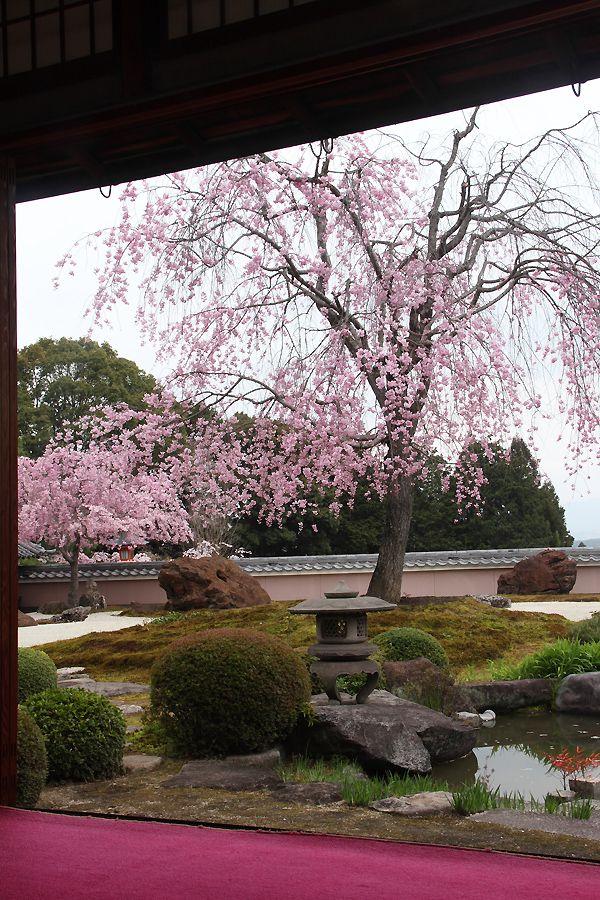 #Garden of Shobo-ji temple, #Kyoto, #Japan: photo by 92san